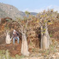 Socotra Adenium Socotranum with Foreigne