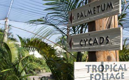 Rancho Soledad Nurseries, Inc — Always Growing, Since 1954