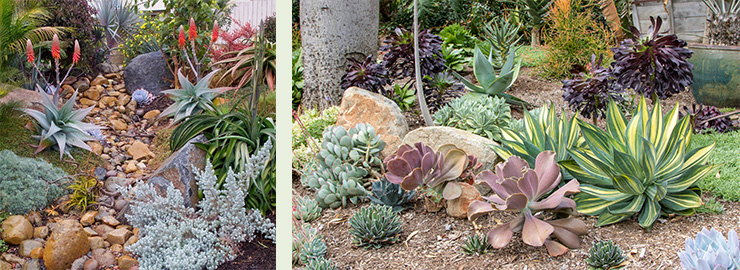 Unique landscape design and installation services in San Diego area by Rancho Soledad Nursery